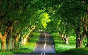 पेड़ों का महत्व निबन्ध short essay on  essay on importance of trees in hindi language पेड़ों का महत्व निबन्ध short essay on importance of trees in hindi language short