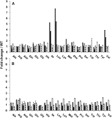 Genome Wide Analysis Of Branched Chain Amino Acid Levels In