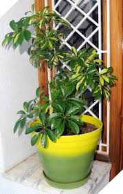 60 Easy House Plants for Indoor Decor Ideas that You Must Have
