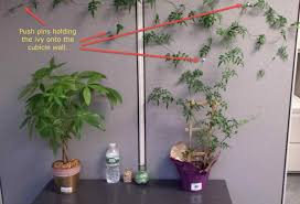 office cubicle plants. Arbor Cubicle Plant Hanger Hook Office For Hanging Plants Upgrade Your Purse Organization Pinterest