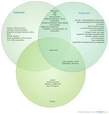 Compare Prokaryotic And Eukaryotic Cells Venn Diagram Bacteria Virus Venn Diagram