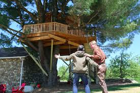 treehouse masters brewery. Animal Planet GO - Watch Full Episodes And Live TV Treehouse Masters Brewery