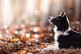 dog, Animals, Depth Of Field, Nature ...