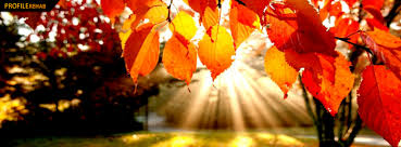 Image result for beautiful pictures of autumn season