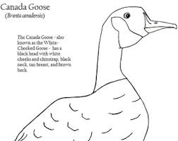 Small Picture American Avocet Coloring Page