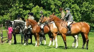 Klicke hier um dein gratis ausmalbild pferde mit sättel auszudrucken. Reiterferien Fur Kinder Kribbelbunt