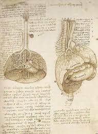 leonardo da vinci s vitruvian man explained belly button leonardo da vinci the mechanics of man
