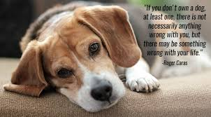 Quotes About Dogs Inspiration 48 Inspirational Quotes About Dogs That Will Make Your Day The Dog