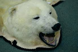 bear rug fake polar image 2 mounted including full head claws taxidermy for faux skin