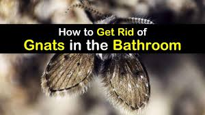 bathroom gnats infestation how to get
