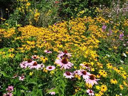 Small Picture Garden Design Garden Design with Wildflower gardens on Pinterest