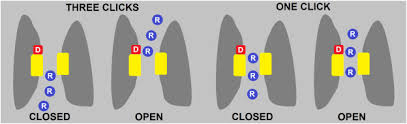vole gated proton channel