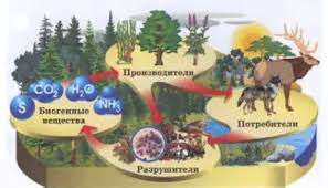 Экосистема Экологическая это что такое какие определение  Компоненты экосистемы