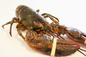 Whole Live Lobster - The Organic ...