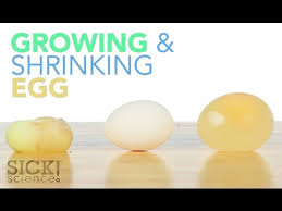 Growing And Shrinking Growing And Shrinking Egg Sick Science 187 Techeverything