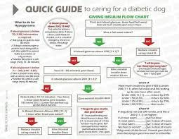 Dog Blood Sugar Chart Pin By Natalie Balster Cross On Animal Care Diabetic Dog