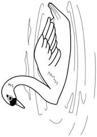 36 Best Swans Images Swans Swan Beautiful Birds