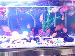 valerius aquariums tilak chowk belgaum aquariums in belgaum justdial