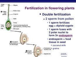 Angiosperm Vs Gymnosperm Venn Diagram Chapter 38 Angiosperm Reproduction