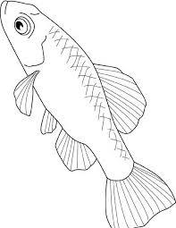 Pesce Di Lago Da Colorare Disegni Da Colorare E Stampare Gratis
