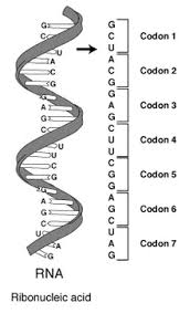 Genetic Code Wikipedia