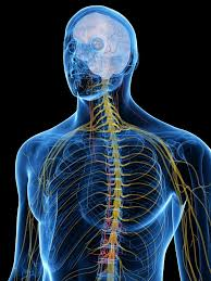 Reflexology Chart Vagus Nerve 19 Factors That May Stimulate Your Vagus Nerve Naturally