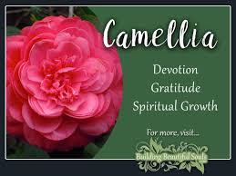 camellia meaning symbolism