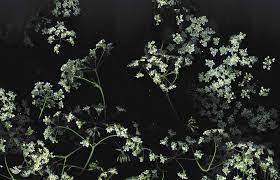 Aesthetic Dark Floral Desktop Wallpaper ...