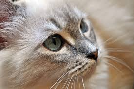 Cat Years Chart Calculator How To Calculate Cat Years To Human Years Catster