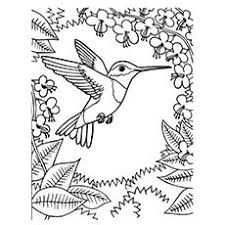Small Picture Very Detailed Realistic Hummingbird Coloring Page For Adults free