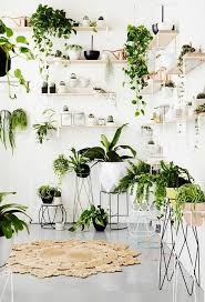 Plant Interior Design Interesting Decorating Design