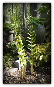 Small Picture 238 best My shade garden images on Pinterest Shade plants Shade
