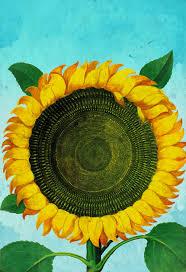 sunflower print sunflowers art botanical print flower kitchen