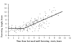 Farrowing Chart More Frequent Sow Feedings Reduce Stillborn Numbers Iowa Pork
