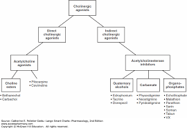 Respiratory Medications Chart Autonomic Nervous System Structure And Medications Lange