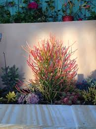Best 25 Inexpensive Landscaping Ideas On Pinterest  Yard Plant Ideas For Backyard