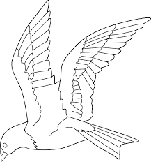 Eastern Bluebird Coloring Page Bird Sheet Flying Sheets Pages Of