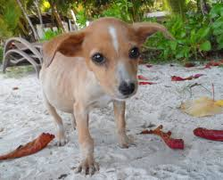 abused animals.  Animals Help Abused U0026 Neglected Animals In The Seychelles On S