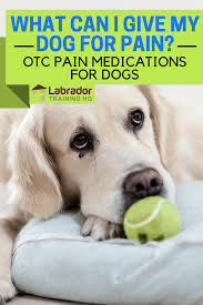 What Can I Give My Dog For Pain Otc Pain Medications For