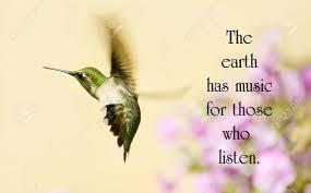 Citation Inspirée De La Nature Avec Une Belle Colibri En Mouvement Dans Le Jardin