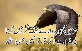 Shaheen Quotes