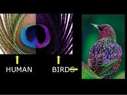 Bird Vision Barca Fontanacountryinn Com