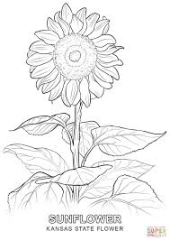 Small Picture Realistic Flower Coloring Pages Realistic Bouquet Of Flowers In