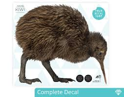 Small Picture Kiwi Wall Decal YOUR DECAL SHOP NZ Designer Wall Art Decals