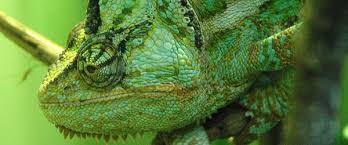 Zoology Degree Bsc Zoology Study At Bristol University Of Bristol