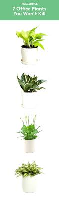 small office plant. 7 Office Plants You Wont Kill Fill Your Workspace With Some Greenerygood Small Desk Where To Plant .