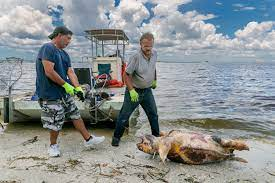Their Impacts on Sea Turtles ...