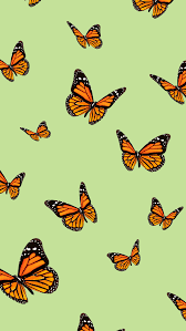 VSCO iPhone Wallpapers Butterfly (Page ...