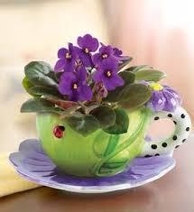 Resultado de imagem para violetas
