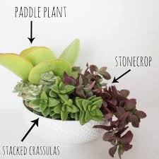 how to plant a succulent garden in a bowl succulents used